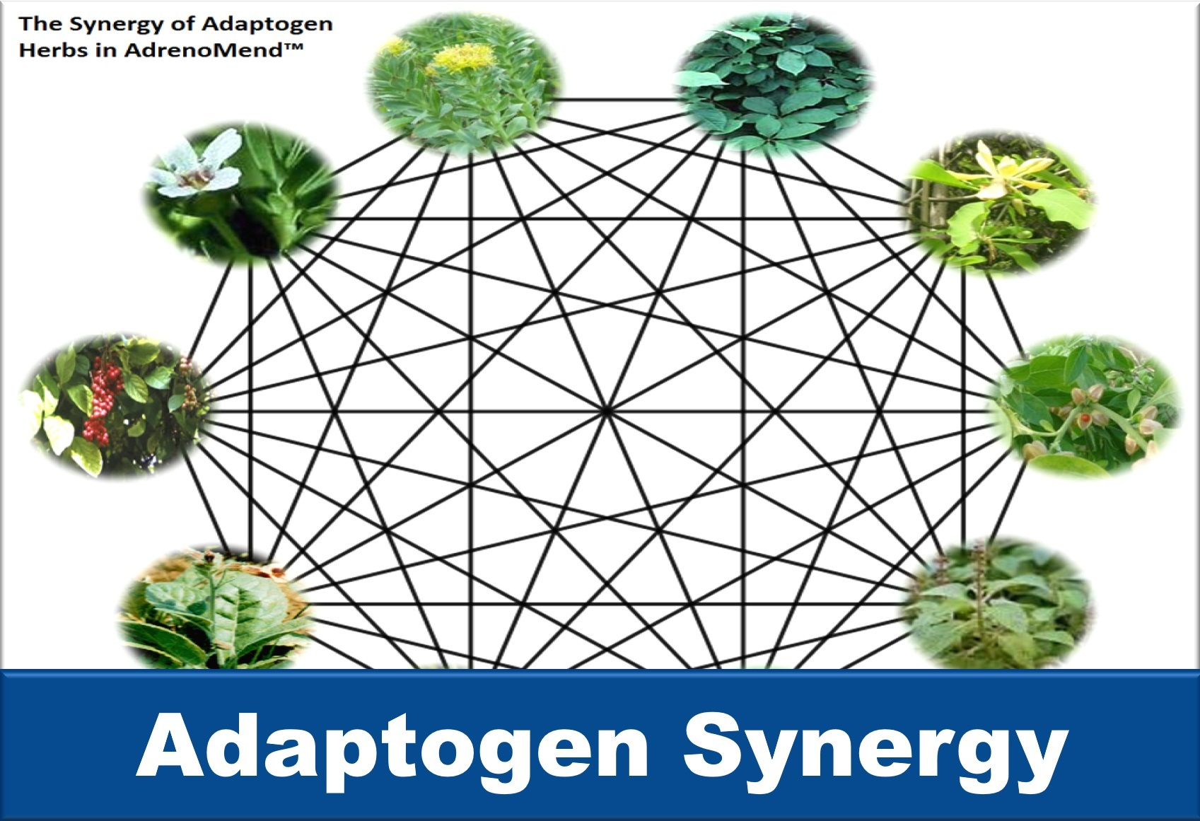 Learn about adaptogen synergy at Your hormones