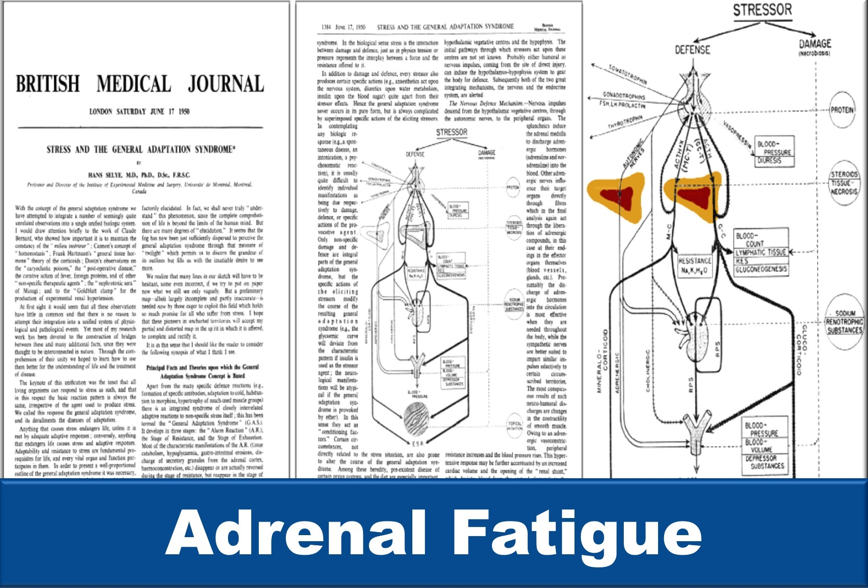 Learn about adrenal fatigue at Your Hormones