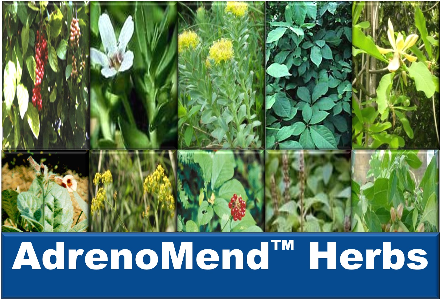 Learn about the AdrenoMend™ Herbs