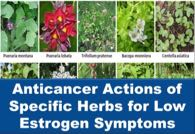 Anticancer Actions of Specific Herbs for Low Estrogen Symptoms