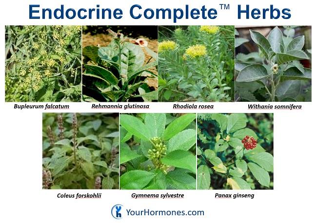 Endocrine Complete Herbs