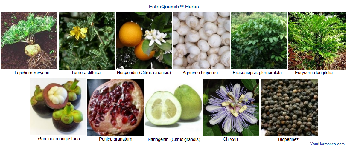 Learn about the herbs in EstroQuench™
