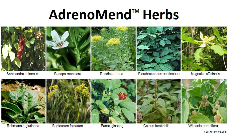 Herbs in AdrenoMend™