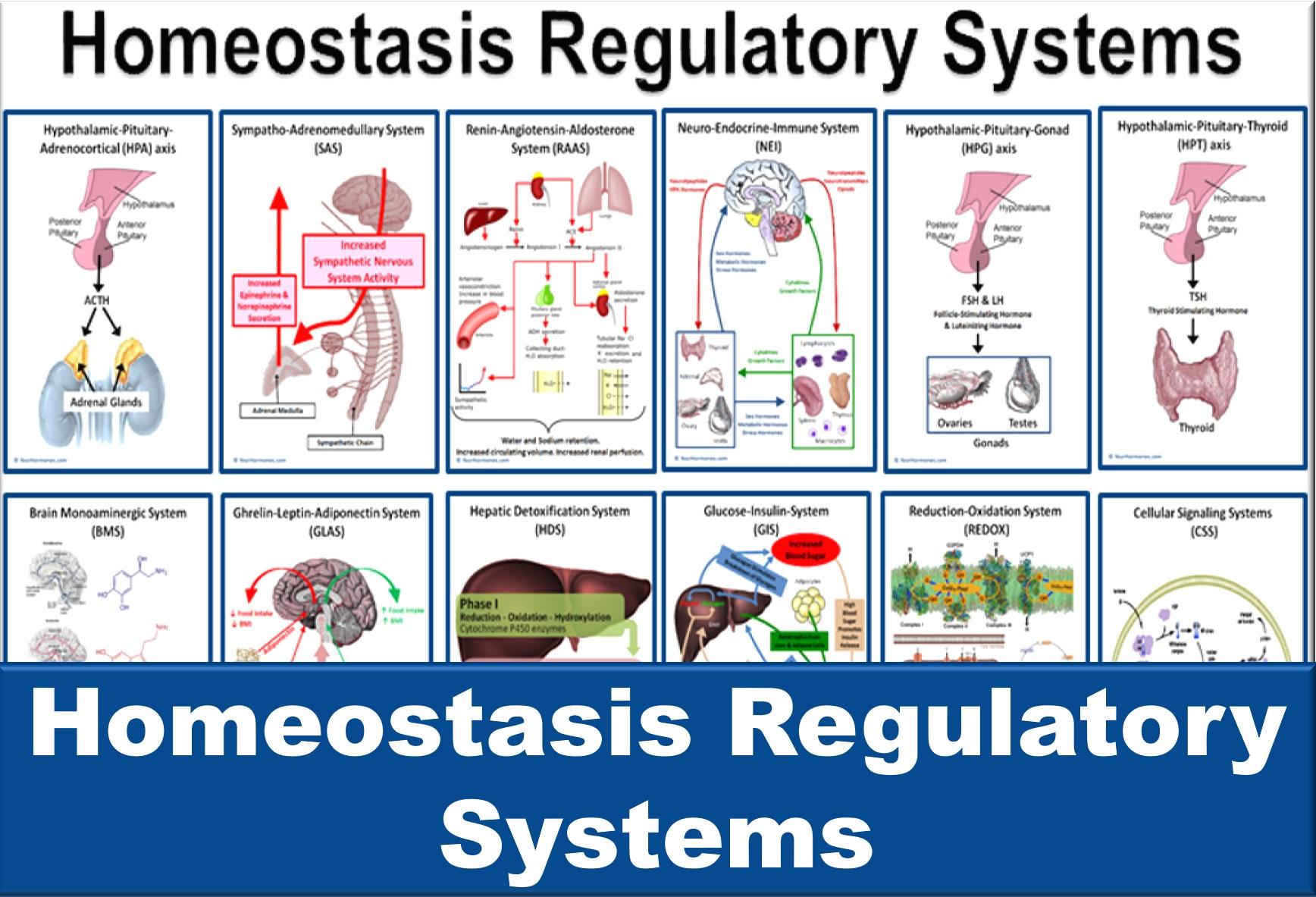 Homeostasis Regulatory Systems