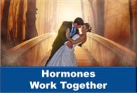 Hormones Work Together