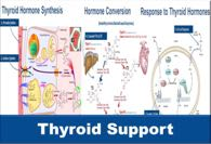 Phytotherapeutic Support of Thyroid Function. Seven specific actions required for production and activity of thyroid hormones.